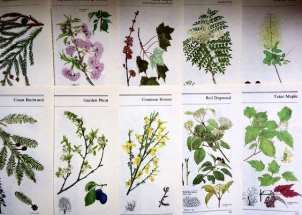 Trees and Shrubs - 5 Book Pages